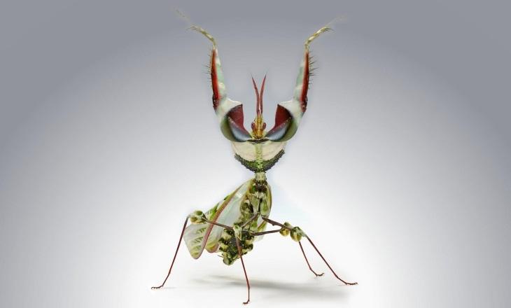 Осторожно: самые страшные насекомые на земле