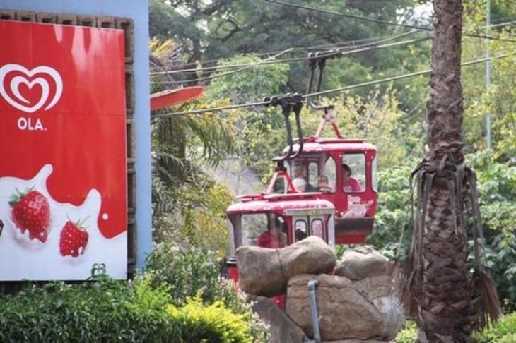 Зверьки вне клетки: лучшие открытые зоопарки мира