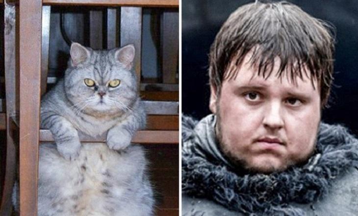 Коты, которые сильно напоминают героев кино и мультфильмов