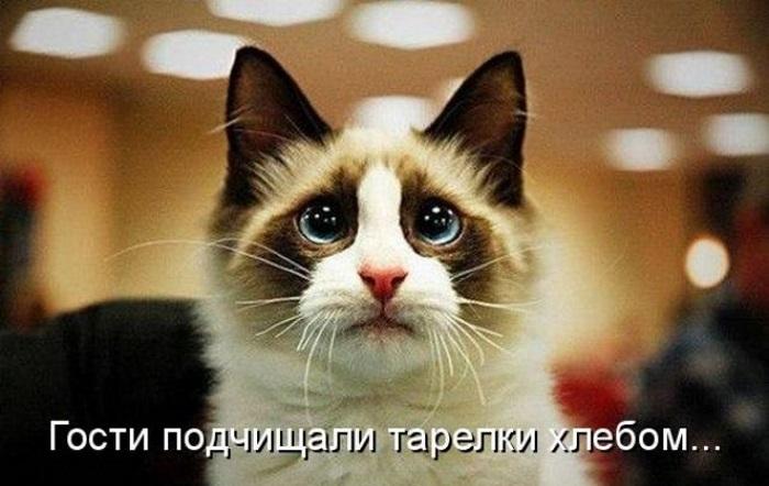 Веселые котоматрицы: 50 картинок со смешными надписями