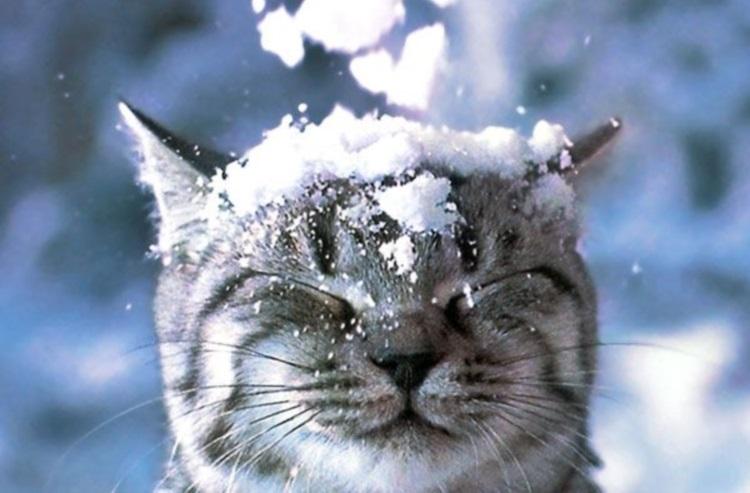 Кошки, у которых сложные взаимоотношения со снегом: 50 самых смешных фото