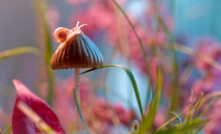 50 необыкновенно красивых фотоснимков природы