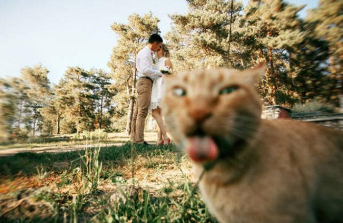 50 животных, удачно попавших в кадр
