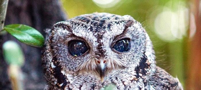 Удивительные животные, живущие на нашей планете