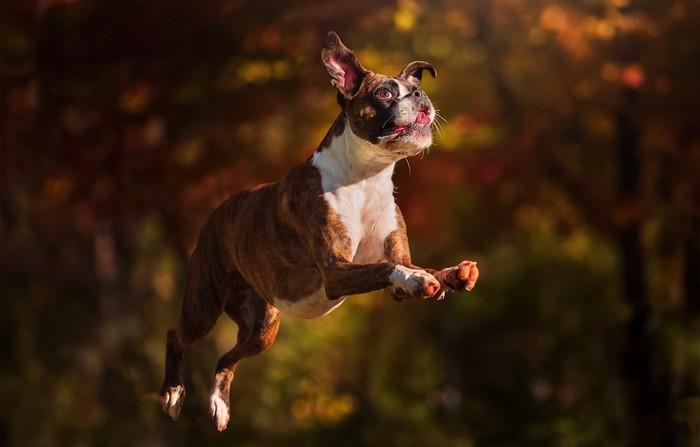 40 очаровательных собак, которые научились летать