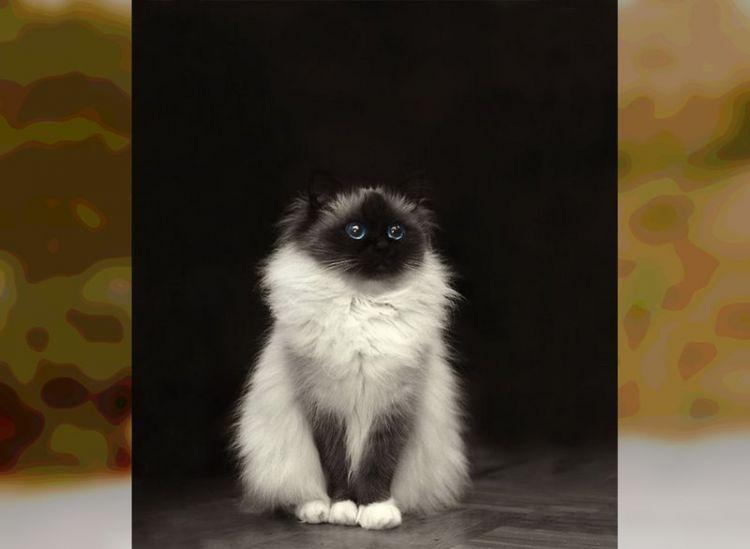 50 очень пушистых и очаровательных кошек