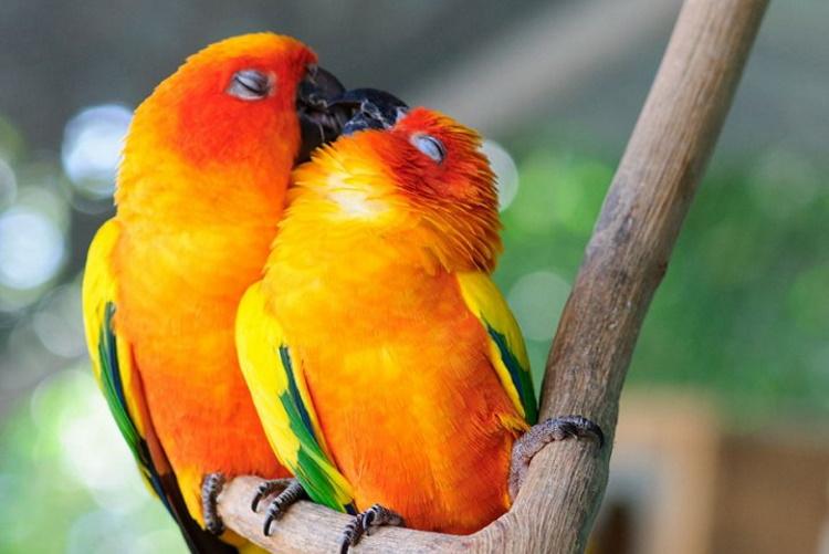 Милые фото птиц, любви которых можно только позавидовать