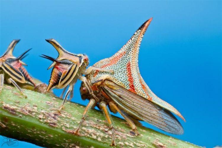 Когда природа развлекается: очень странные живые творения