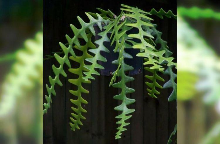 Восхитительные комнатные растения, которые стоят вашего внимания