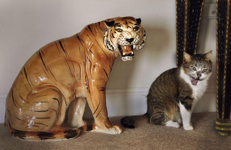 40 снимков, доказывающих, что кошки - веселые существа