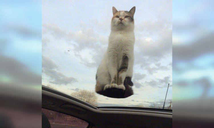 коты - это инопланетяне
