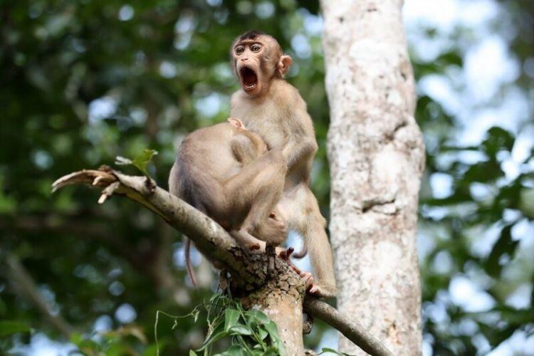Самые смешные фотографии животных: 30 снимков