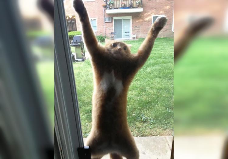 35 забавных фото животных, которые очень хотят попасть домой