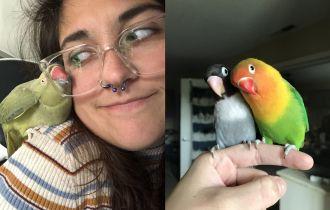милые и веселые попугаи