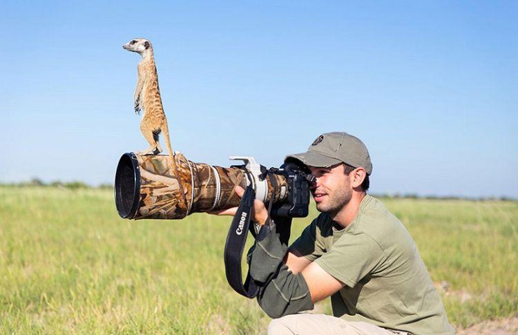 Животные фотографы