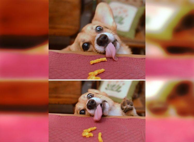 Наглость-второе счастье: 30 хвостатых воришек еды
